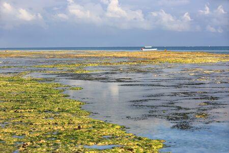 Ocean shore at low tide in morning, Landscape on Zanzibar, Africa Stock fotó
