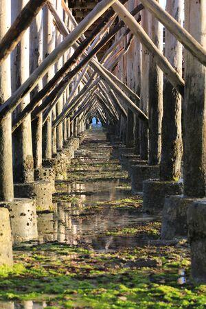 view on bridge piles on ocean shore at low tide, Zanzibar