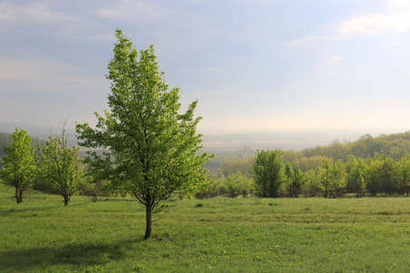 morning landscape with green tree on spring meadow