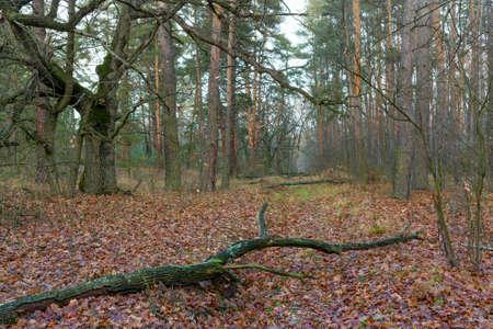Autumn scene in deep forest