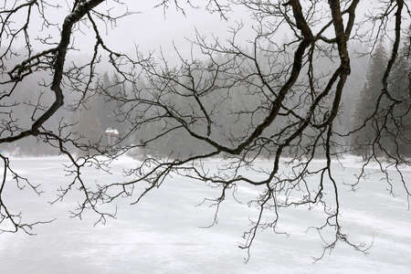 tree branches over a frozen lake in winter, Synevyr lake in Ukraine Standard-Bild - 163816469