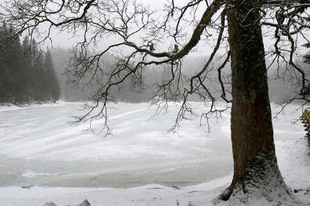 big tree on winter Synevyr lake in Ukraine, Carpatian mountains Standard-Bild