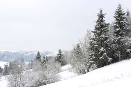 winter landscape with forest on mountain slope Standard-Bild - 163828257
