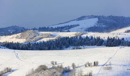 mountain meadow in winter Carpathians, Ukraine