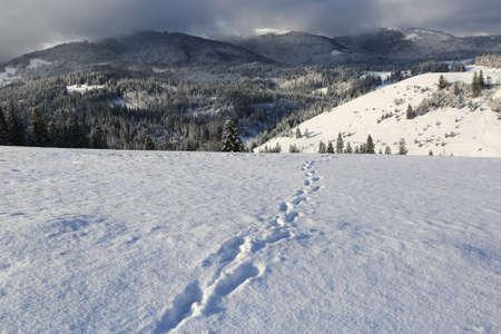 trail on snow meadow in mountains, Carpathians in Ukraine
