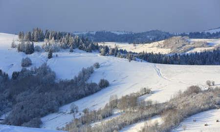 nice winter landscape in Carpathian mountains
