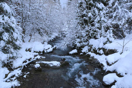 winter landscape with mountain river in snowbounded forest