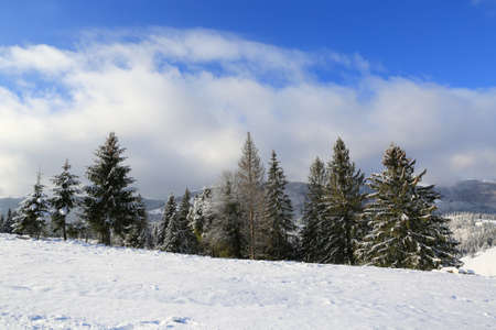 winter landscape in Carpathians, Ukraine