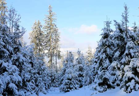 winter scene in Carpathian forest, Ukraine Standard-Bild