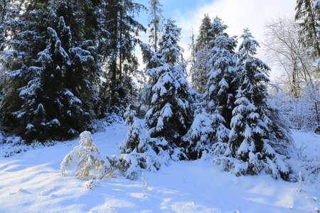 Winter landscape in Carpathan mounatin forest in Ukraine Standard-Bild