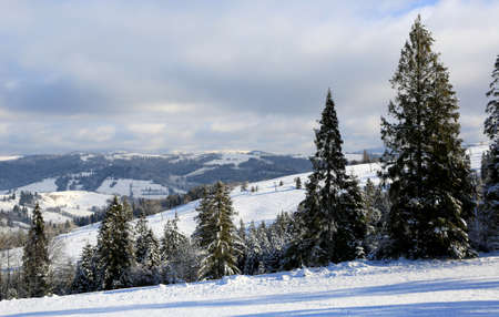 winter scene in Carpathian mountains, Ukraine