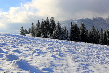 winter scene with snowy field in carpathian mountains. Take it in Ukraine Standard-Bild
