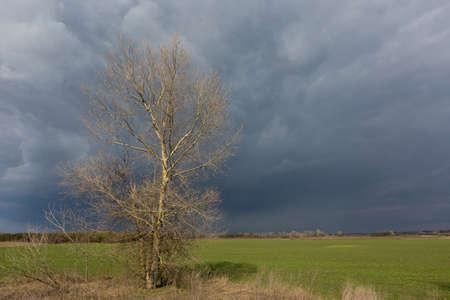 Alone leafless tree on green farmig field under heavy stormy clouds in sky