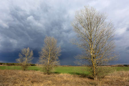 Leafless trees on spring meadow under stormy clouds in sky