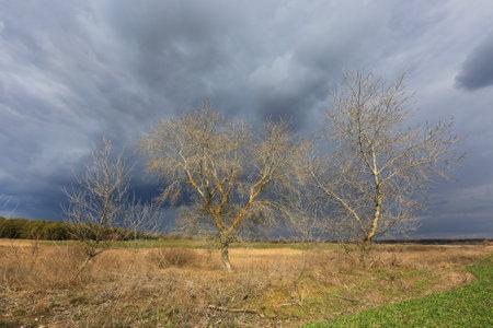leafless trees in spring time near farming field under thunderstorm clouds in sky Standard-Bild
