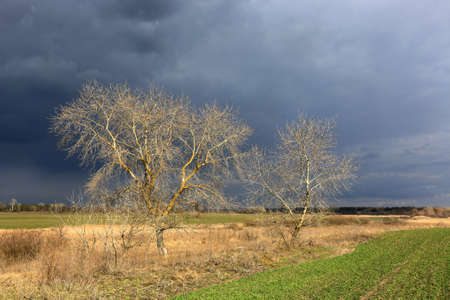 leafless trees in spring steppe before thunderstorm