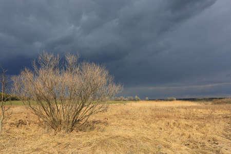 Landscape witht hunderstorm in spring steppe Standard-Bild