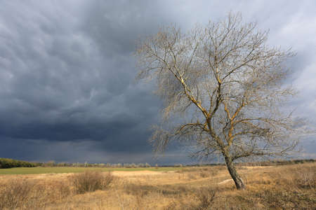 alone leafless tree on spring meadow under thunderstorm clouds in sky