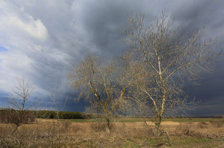 leafless trees in spring time near farming field under heavy sky with thunderstorm clouds