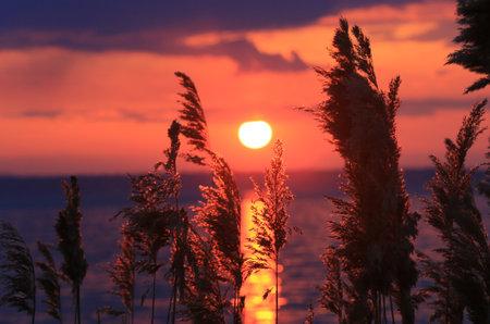 Cane on lake shore against sunset background
