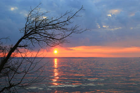 Landscape with tree near lake on sunset background