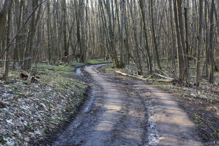 Rut road turn un spring forest