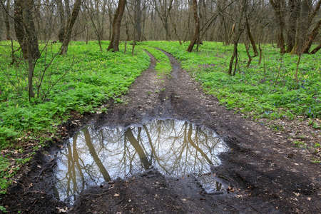 scene dirt road with puddle in spring forest