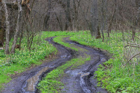 rut road in spring forest after rain