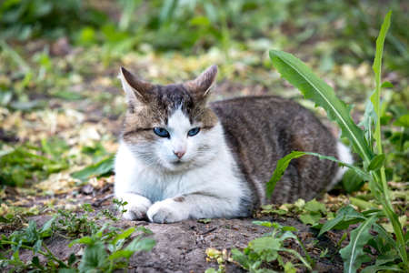 cat laying on ground among green plants