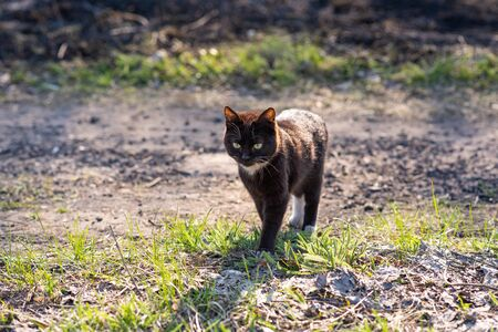 A homeless cat walks along the street, where there is a little green and grass and a little singe