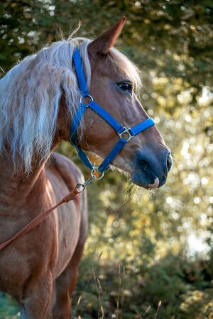 Photo of a horse outdoors