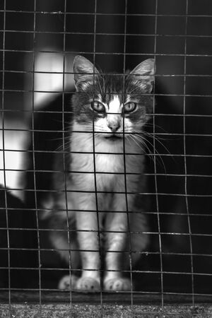 Homeless cat in a shelter for cats. Animal in the cage Imagens