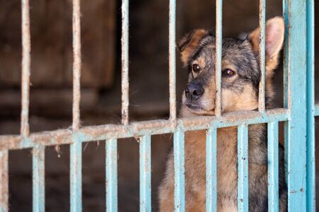 Homeless dog in a dog shelter. Animal in the cage Imagens