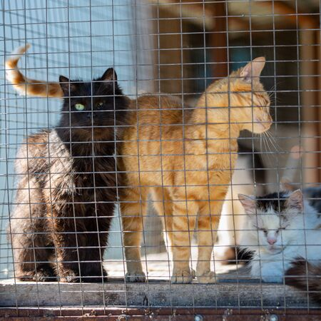 Homeless cats in an animal shelter. Cell