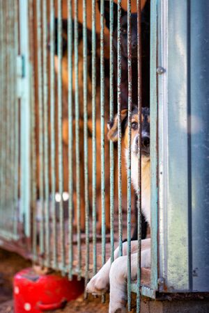 Homeless dog in a dog shelter. Animal in the cage.