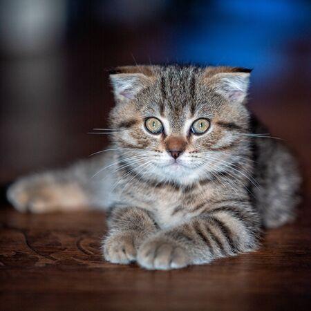 Portrait of a cat. Kitten. Pet