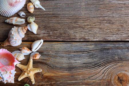 A seashells on a wooden