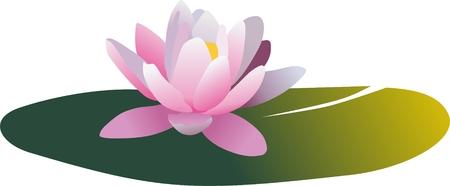 muguet fond blanc: de vecteur de leau nymphaea lilly - Irene Illustration