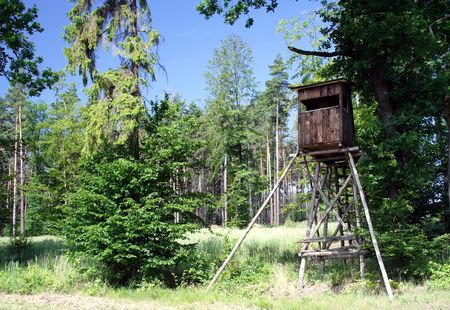 Wooden raised hide for hunting at forest photo