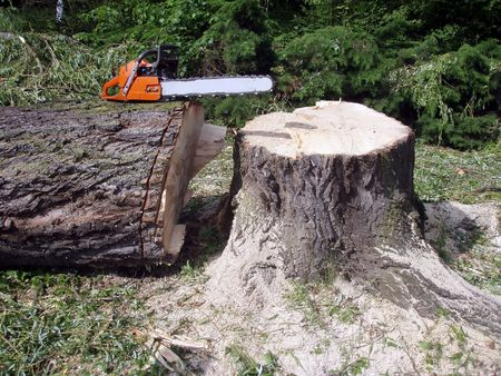 inactive: Inactive chainsaw on a big wood