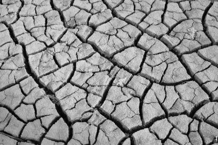 shrinkage: texture of shrinkage cracks BW photo