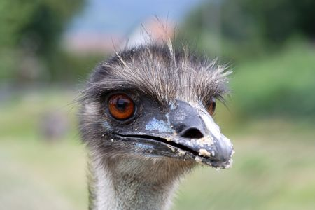 curiousness: ostrich head portrait close up