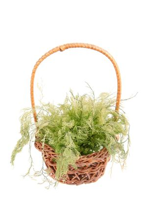 algas verdes: algas verdes en cesta de mimbre aislados en fondo blanco