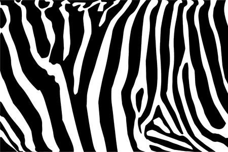 vector - zebra texture Black and White Vector