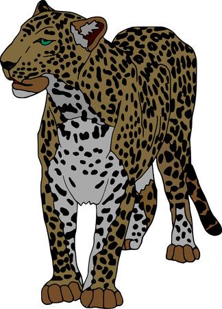 panthera: vettoriale - panthera isolato su sfondo bianco