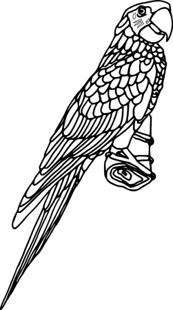 ara: vector - contour ara isolated on white background Illustration