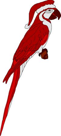 ara: vector - color santa ara isolated on white background