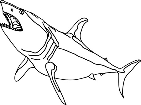 vector  - contour shark  isolated on white background