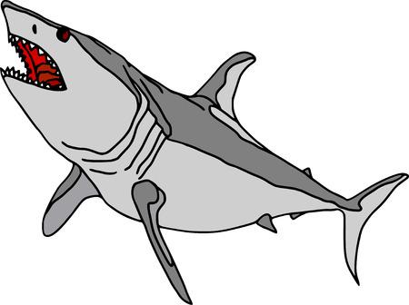 vector  -  shark  isolated on white background Vector