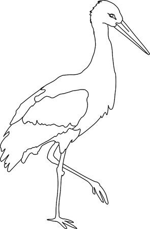 cigogne: vecteur